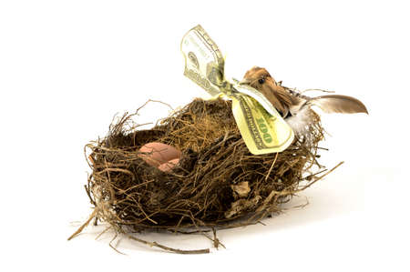 An isolated over white background image of a bird holding a hundred dollar bill in its beak to represent financial nest egg concepts.