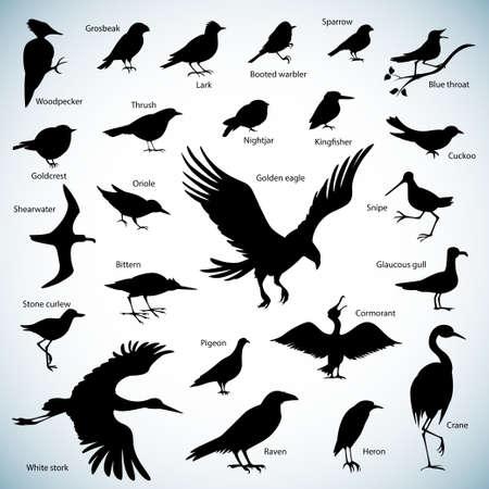 一連の抽象的な背景に鳥シルエット