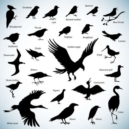 blue heron: Set of birds silhouettes on abstract background