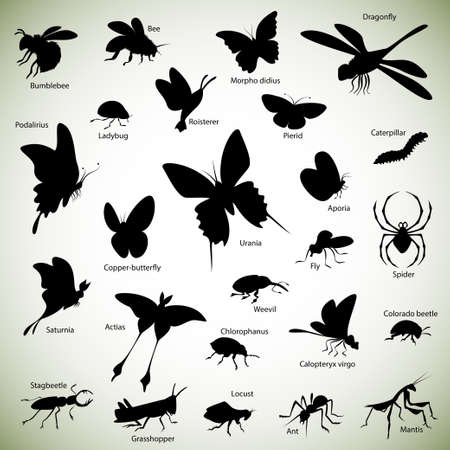 honeybee: Set of insect silhouettes on abstract background