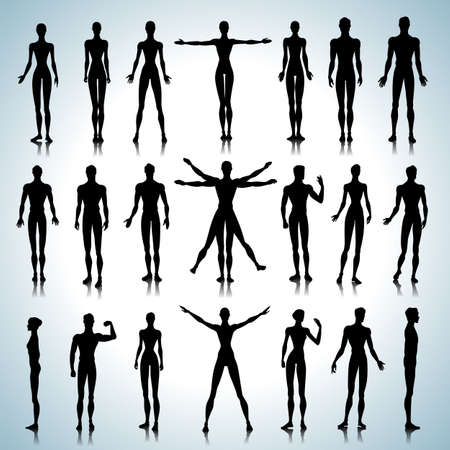 male model: Set of male and female anatomical silhouettes in different poses