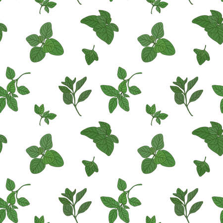 potherb: Oregano seamless pattern with sample in swatch panel (AI) Illustration