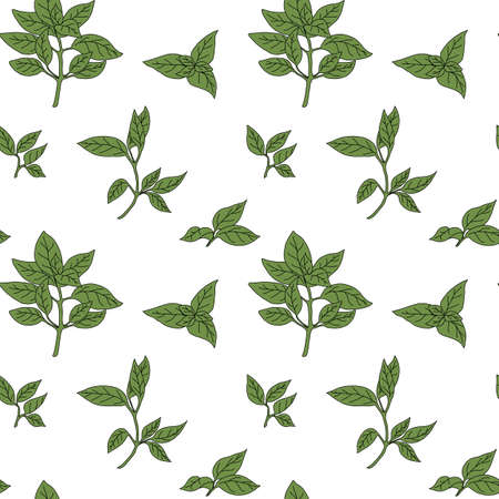 potherb: Basil seamless pattern with sample in swatch panel (AI) Illustration