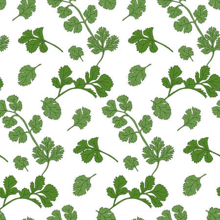 potherb: Cilantro seamless pattern with sample in swatch panel(AI) Illustration