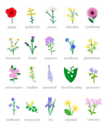 Illustration of set of colorful wildflowers