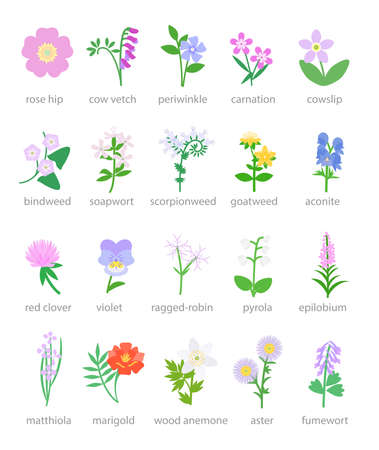 Illustration of colorful wildflowers and garden flowers Vecteurs