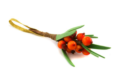 bacca: Branch of sea-buckthorn on a white background