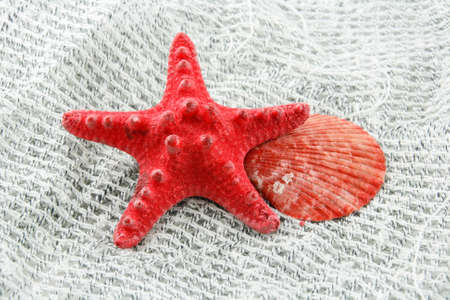 Colored Seashell (Starfish and Scallop) on a Fishing Net Background   photo
