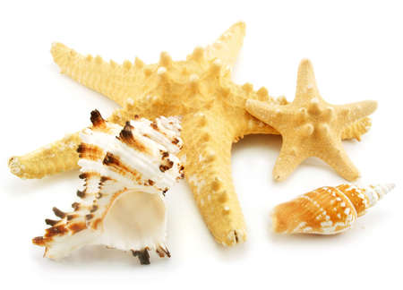 Set of sea cockleshells isolated on a white background photo