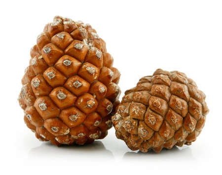 siberian pine: Cones of Siberian Pine Isolated on White Background