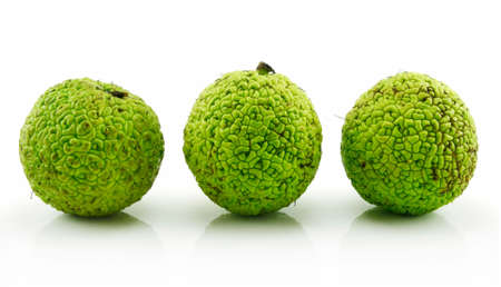 Osage Orange (Maclura) Isolated on White Background Stock Photo - 6464462