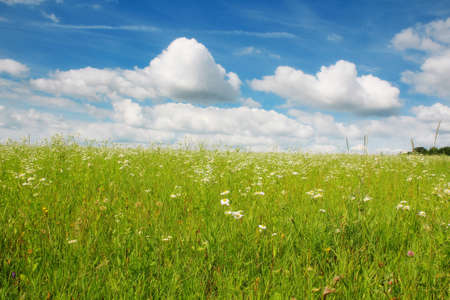 Beautiful summer landscape with a camomile field Stock Photo - 7769114