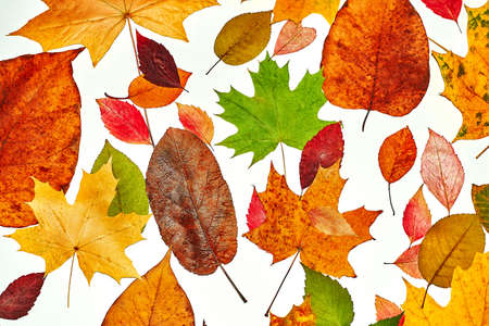 colorful autumn leaves on isolated white background autumn mood frames backgrounds for autumn templates Stock Photo