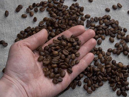 Male hand holds roasted coffee beans, arabica beans are scattered on a burlap napkin. Foto de archivo