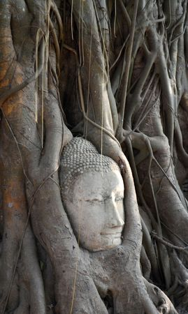 embed: buddha embed in the tree Stock Photo