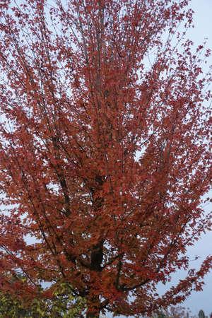 transience: tree in autumn Stock Photo