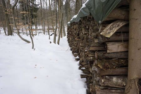 firewood in wintery forest photo