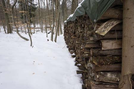 wintery: firewood in wintery forest
