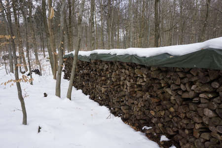 wintery: firewood in wintery forest