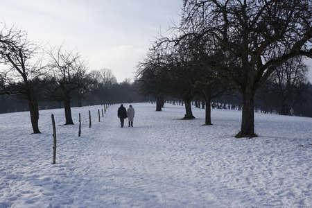wintery: wintery landscaoe