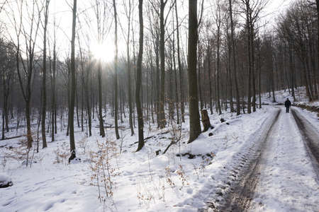 forestry: wintery forestry