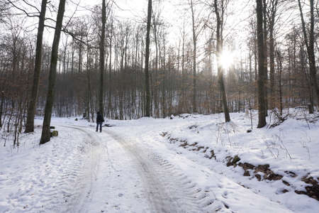 wintery: wintery forestry