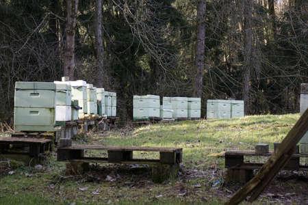 apiculture: apiculture