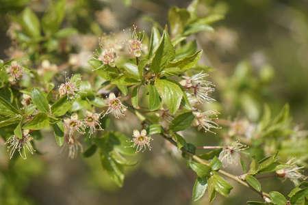 young leaf: j�venes brotes de las hojas