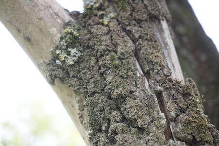 Wood Stock fotó