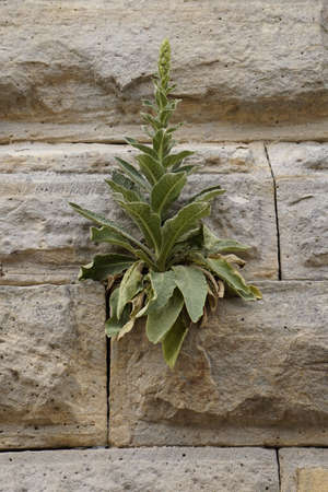 odour: a plant on the wall