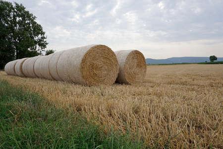 herbage: hay