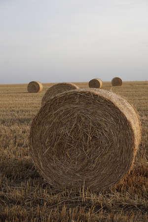 herbage: hay bale