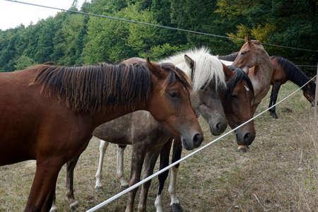 horses Zdjęcie Seryjne