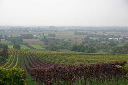 agriculture machinery: Vineyard in autumn