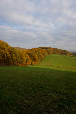transience: Meadow and trees in autumn