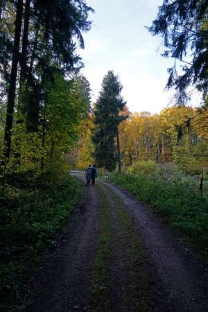 walk in: Forest Walk in autumn