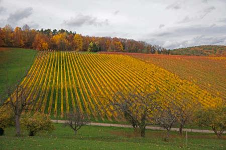 transience: autumn landscape