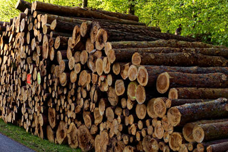 timberland: firewood stacked in forest Stock Photo