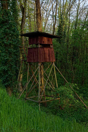 timberland: raised blind in forest