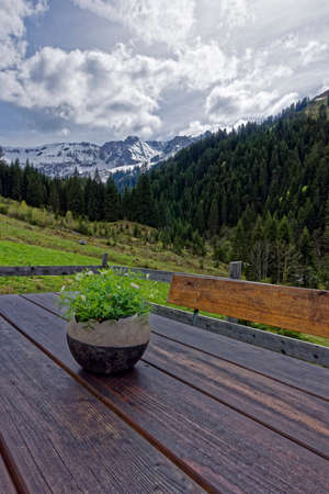 lofty: mountain top with flowers in the front