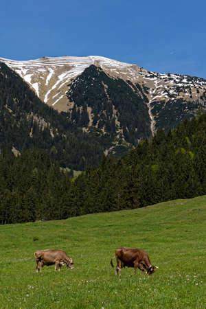 lofty: mountain landscape in spring Stock Photo