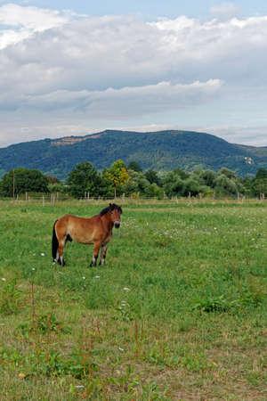 horse paddock in summer