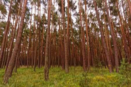 blurred forest, natural background
