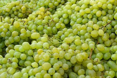 biological vineyard: A heap of fresh white grapes