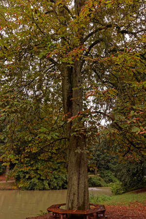 momentariness: a tree in autumn colors Stock Photo