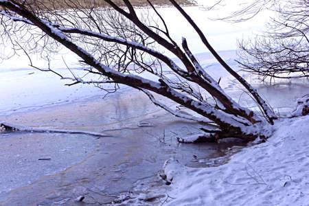 winter landscape, tree and frozen lake