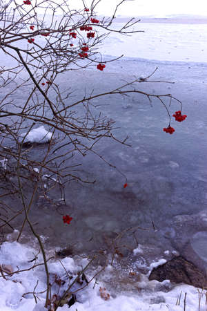 frozen lake and red berries