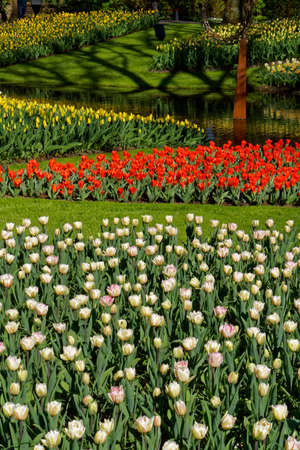 holland: Colorful blooming garden in spring