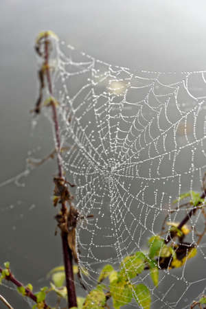 dew drops on spider web, close up