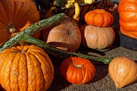 pumpkin, close up, halloween